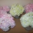 Hydrengias - Pink and Green Wedding Flowers
